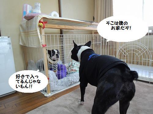 DSCN4603_20121117202521.jpg