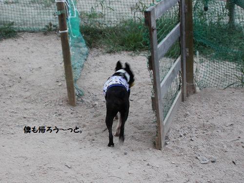ppppp_20120811222451.jpg