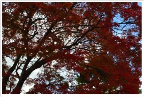 紅葉京都2