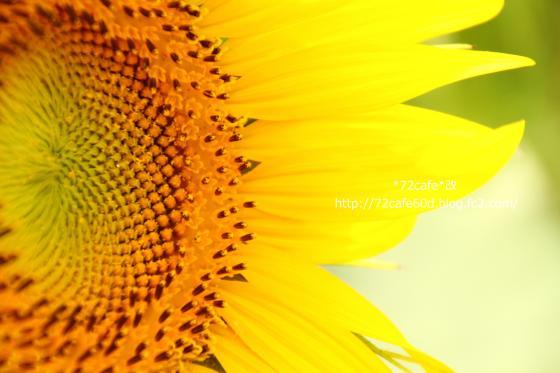 IMG_0042_2_convert_20120816130403.jpg