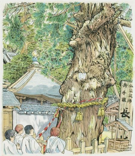 極楽寺の長命杉(450px)