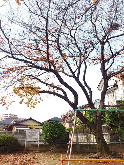 福岡 植木屋営業マン景色