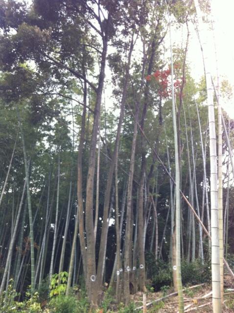 植木伐採 山 福岡