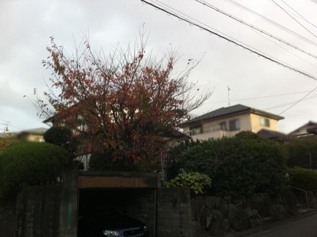 福岡 庭木剪定 植木屋