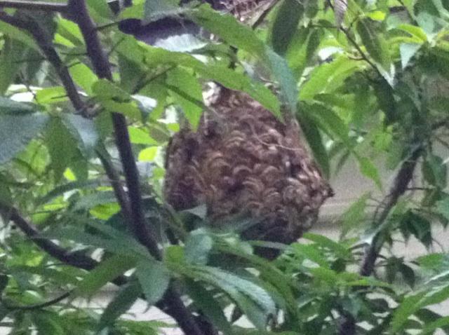 福岡 蜂の巣駆除