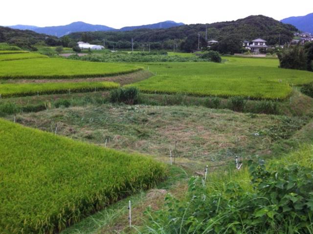田畑の草刈業者 福岡
