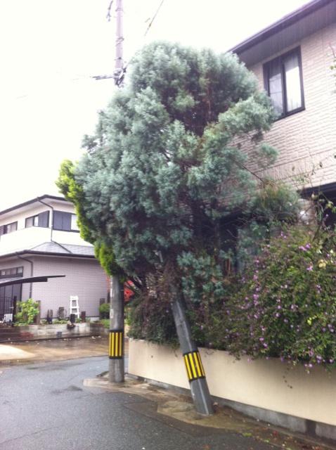 植木剪定 福岡