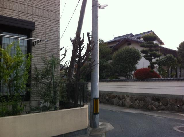 福岡 庭木剪定