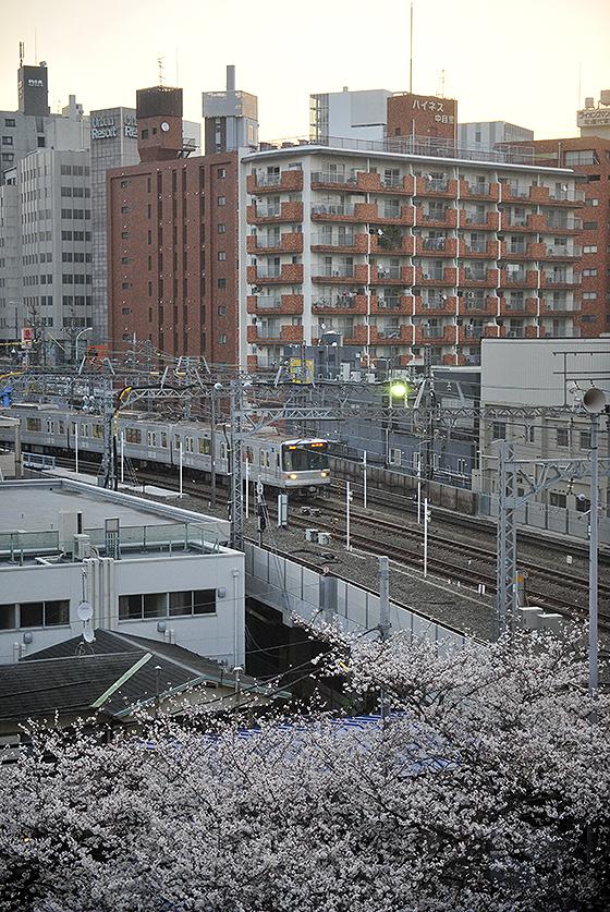 目黒川桜と東急東横線中目黒駅2