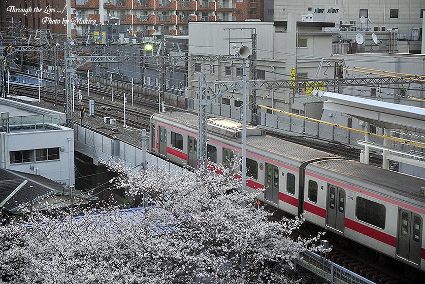 目黒川桜と東急東横線中目黒駅3