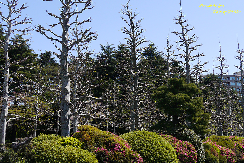 プラタナス並木2