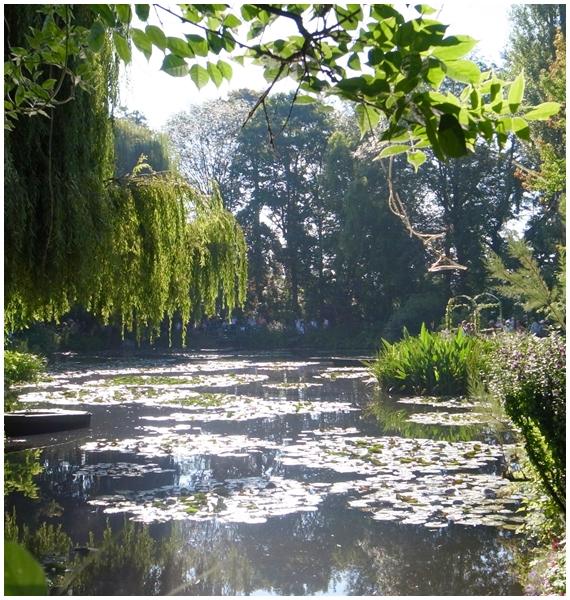 睡蓮のい池2