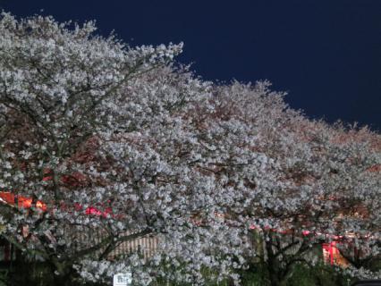20130331夜桜01