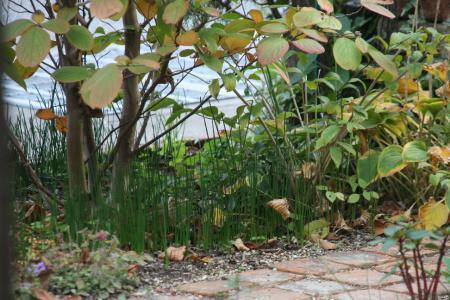 2012-10-27_16.jpg