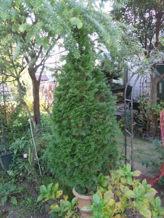 2012-11-25_14.jpg