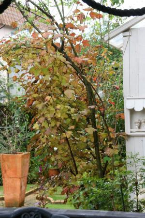 2012-11-26_00.jpg