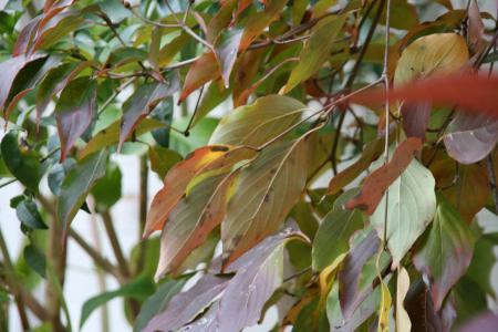 2012-11-28_21.jpg