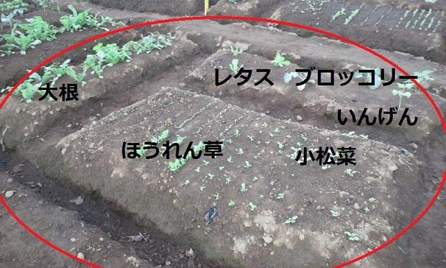 001_20120930213629.jpg
