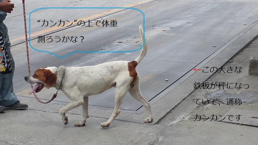 008_20120602224947.jpg