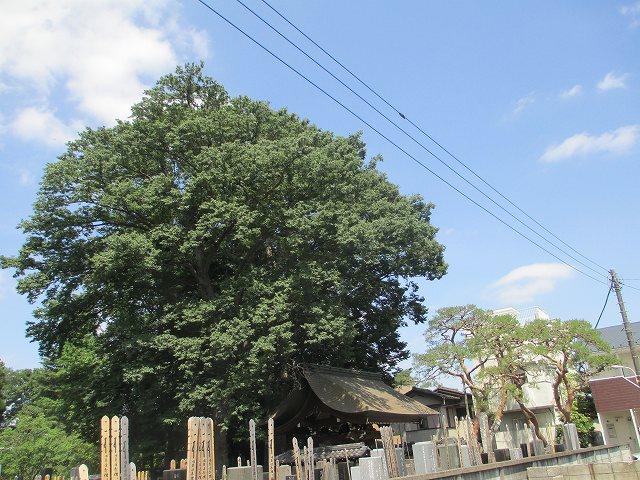 平成25年6月2日・天気予報が外れて晴れ