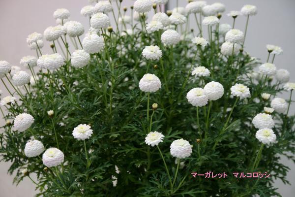 101_convert_20130325113717.jpg