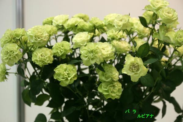 109_convert_20130325113900.jpg