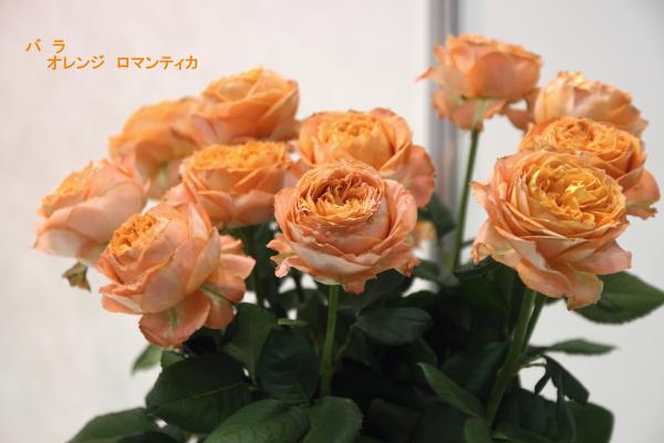 115_convert_20130325114446.jpg