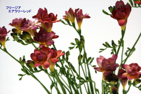125_convert_20130325114836.jpg
