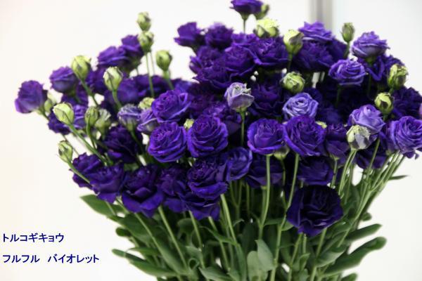 146_convert_20130325115233.jpg