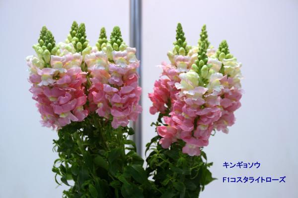 165_convert_20130325115939.jpg