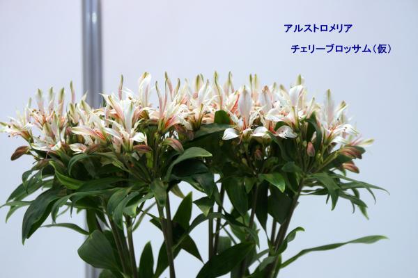 176_convert_20130325120351.jpg