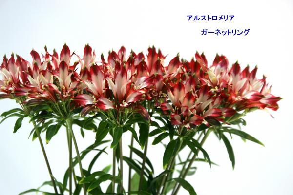 178_convert_20130325120441.jpg