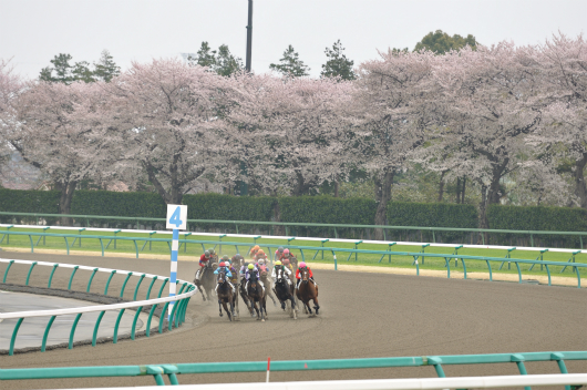 中山競馬場(春)