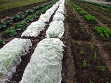 農園の様子、野菜増え2