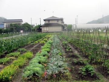 農園の様子、雨