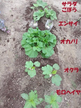 農園の野菜いっぱい3