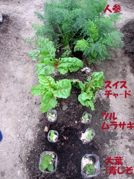 農園の野菜いっぱい4