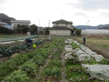 1月の農園5