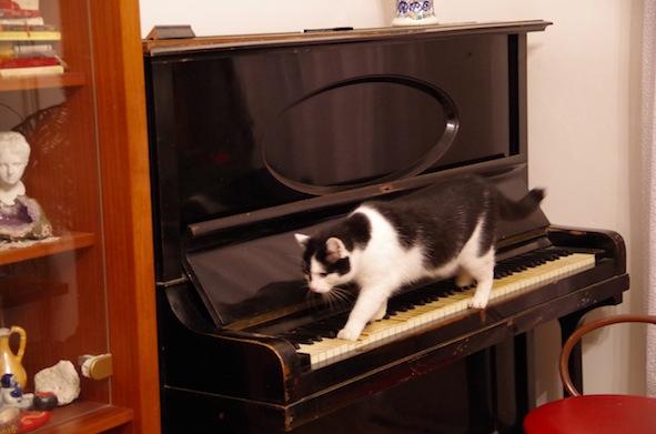 ピアノをひくマジコ