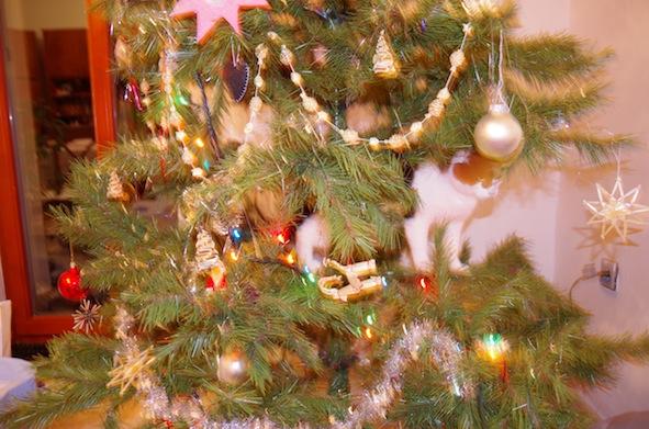 クリスマスツリーに登るマジコ