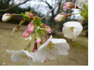 snap_akaazuki_20134118518.jpg