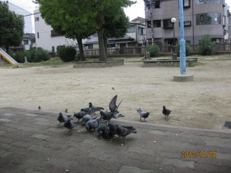 IMG_3692_convert_20121004123208.jpg