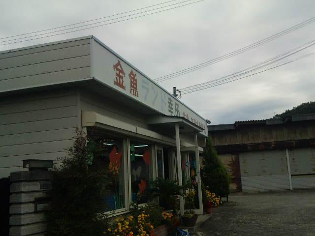 金魚ランド幸田