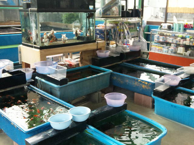 ナニワ金魚池2
