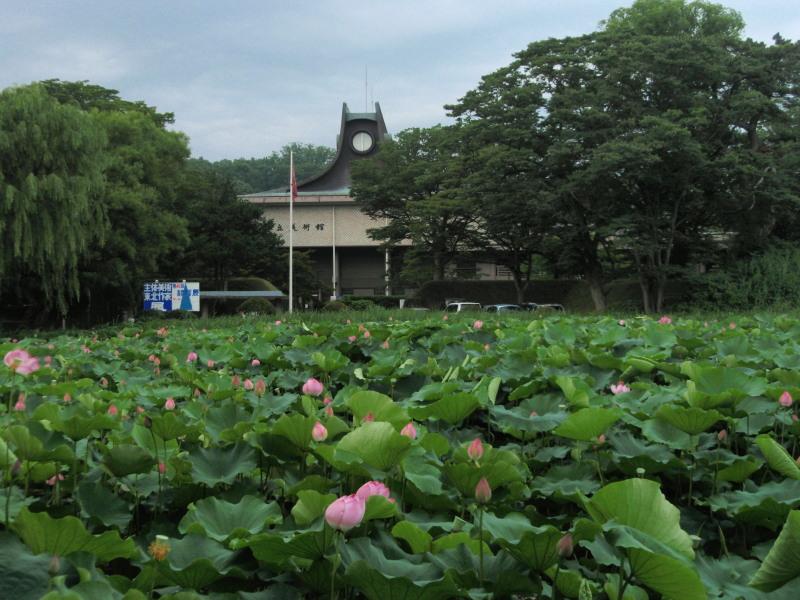 P1010562  蓮の花と平野美術館(2012