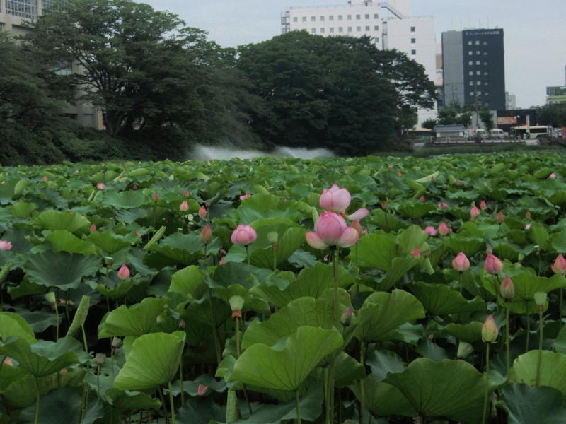 P1010569  蓮の花と堀(2012