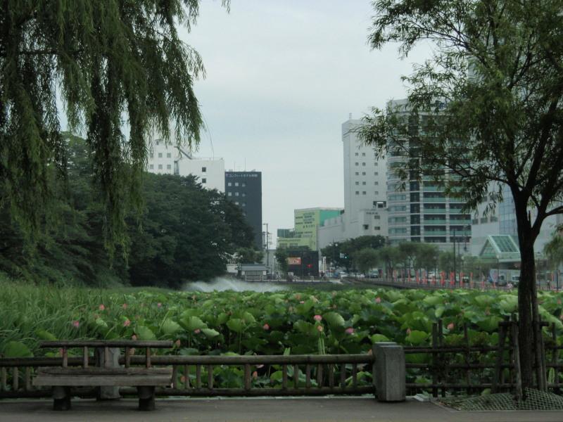 P1010570_01  中土橋付近(2012