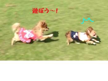 snap_akiyu2_2012105151532.jpg