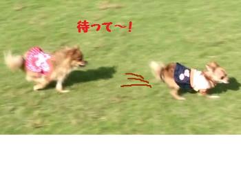 snap_akiyu2_2012105152922.jpg