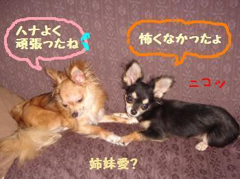 snap_akiyu2_201285221023.jpg